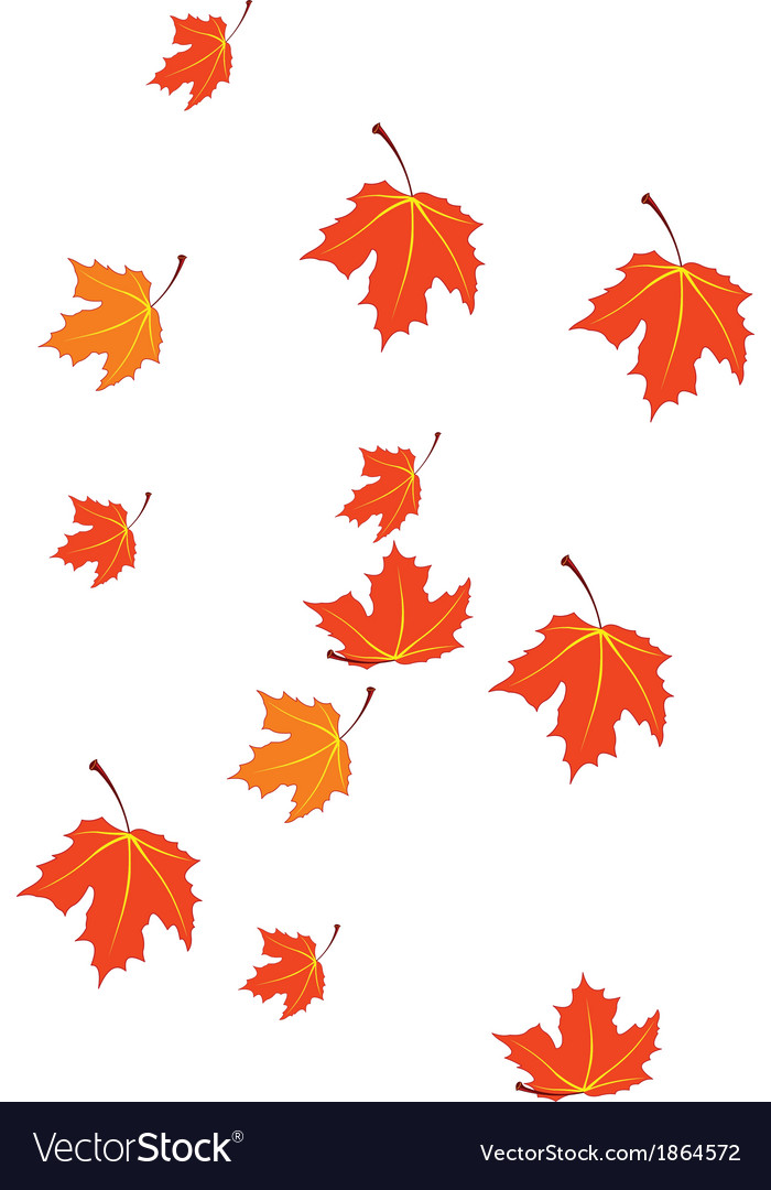 Autumn leaves isolated on white vector | Price: 1 Credit (USD $1)
