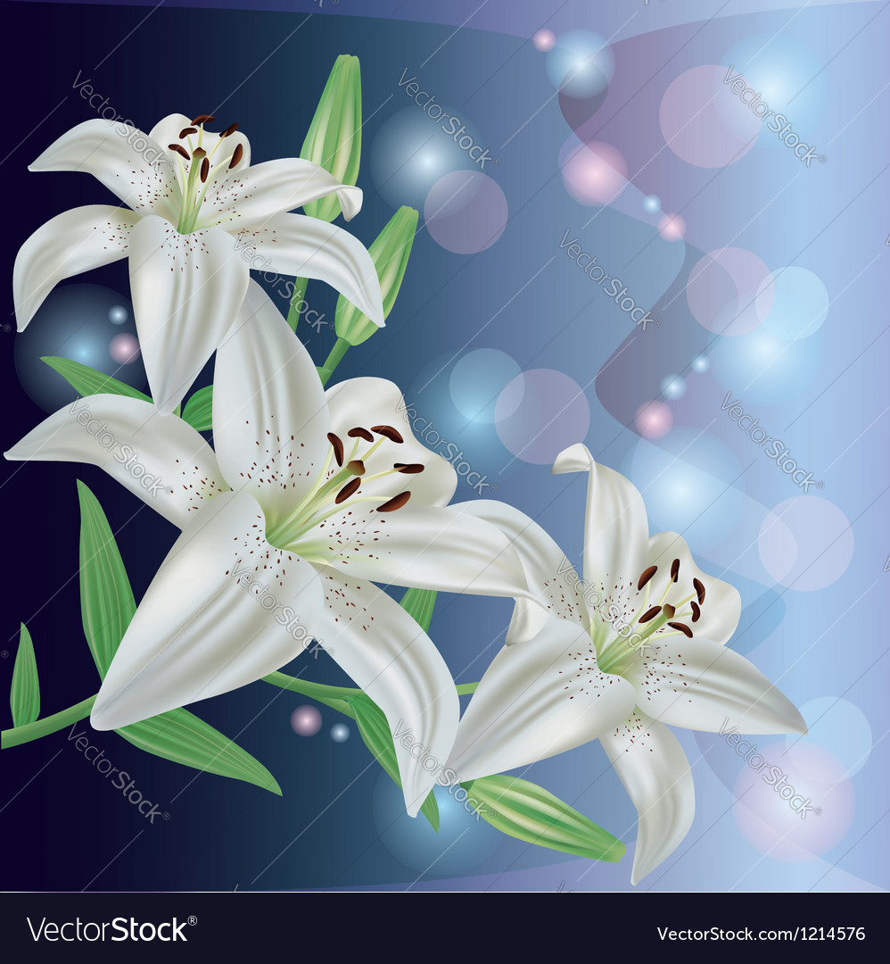Greeting or invitation card with lily flower vector | Price: 1 Credit (USD $1)