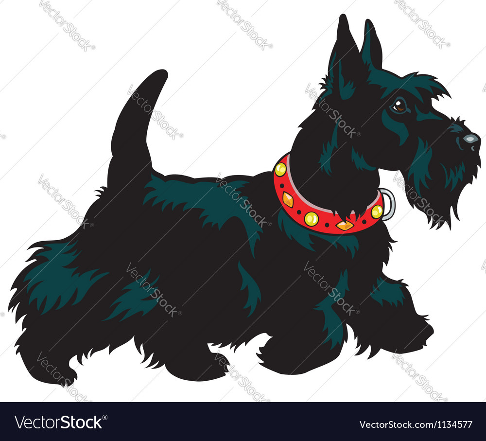 Scottish terrier vector | Price: 1 Credit (USD $1)