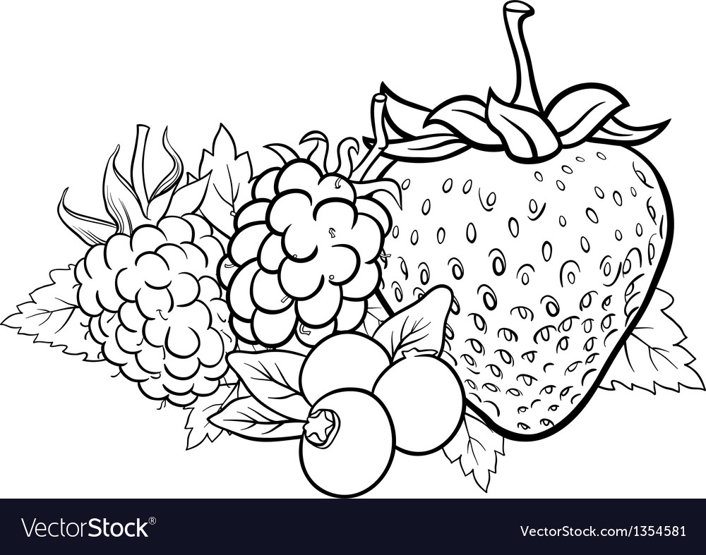 Berry fruits for coloring book vector | Price: 1 Credit (USD $1)