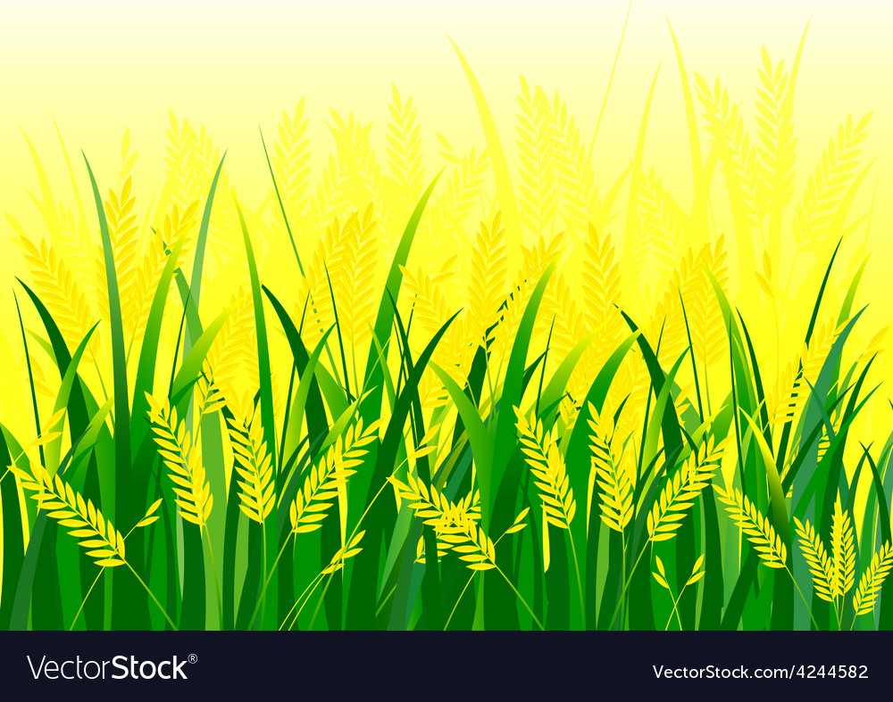 Rice field vector | Price: 1 Credit (USD $1)