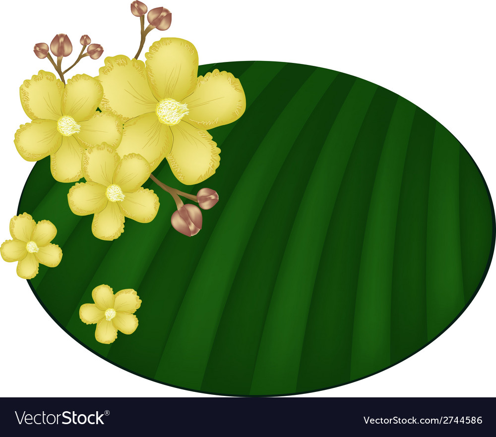 Beautiful yellow simpor flowers on banana leaf vector | Price: 1 Credit (USD $1)