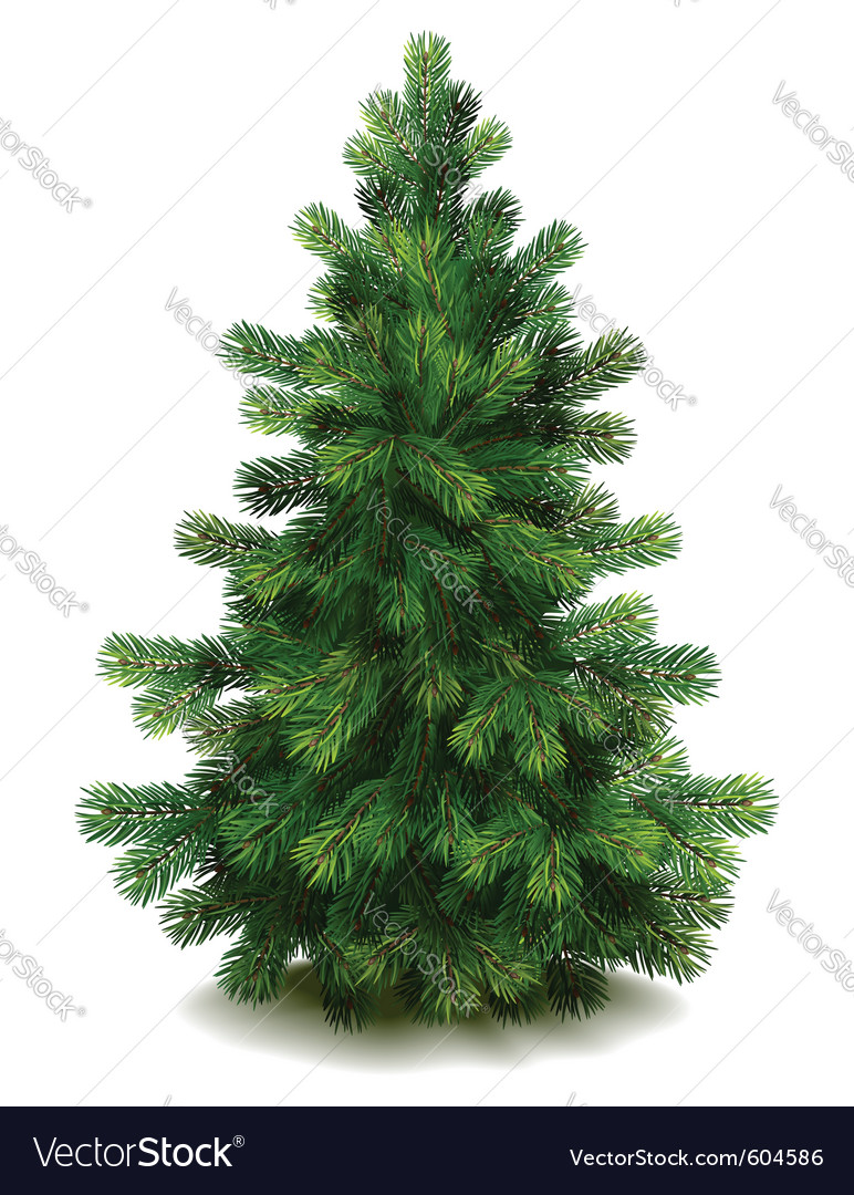 Pine tree vector | Price: 3 Credit (USD $3)