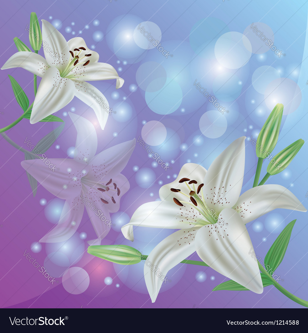 Lily flower background greeting or invitation card vector | Price: 1 Credit (USD $1)