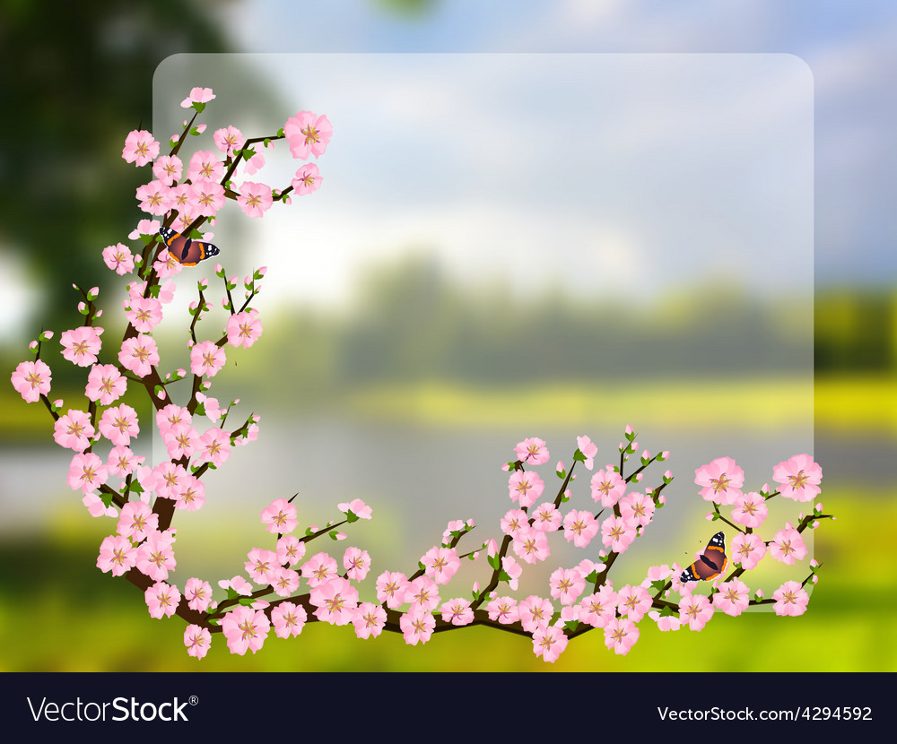 Oriental style painting cherry blossom in spring vector | Price: 1 Credit (USD $1)