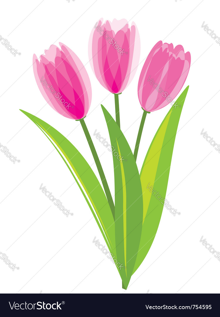 Pink tulips isolated on white background vector | Price: 1 Credit (USD $1)