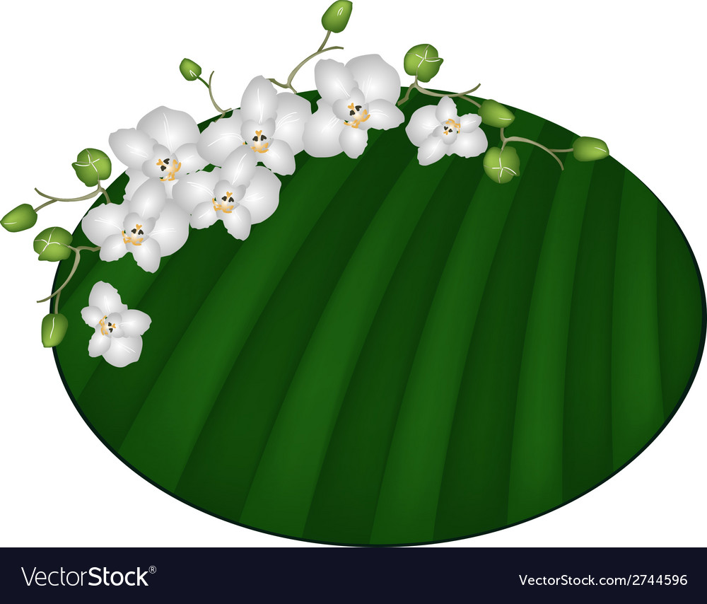 Beautiful moon orchids on green banana leaf vector | Price: 1 Credit (USD $1)