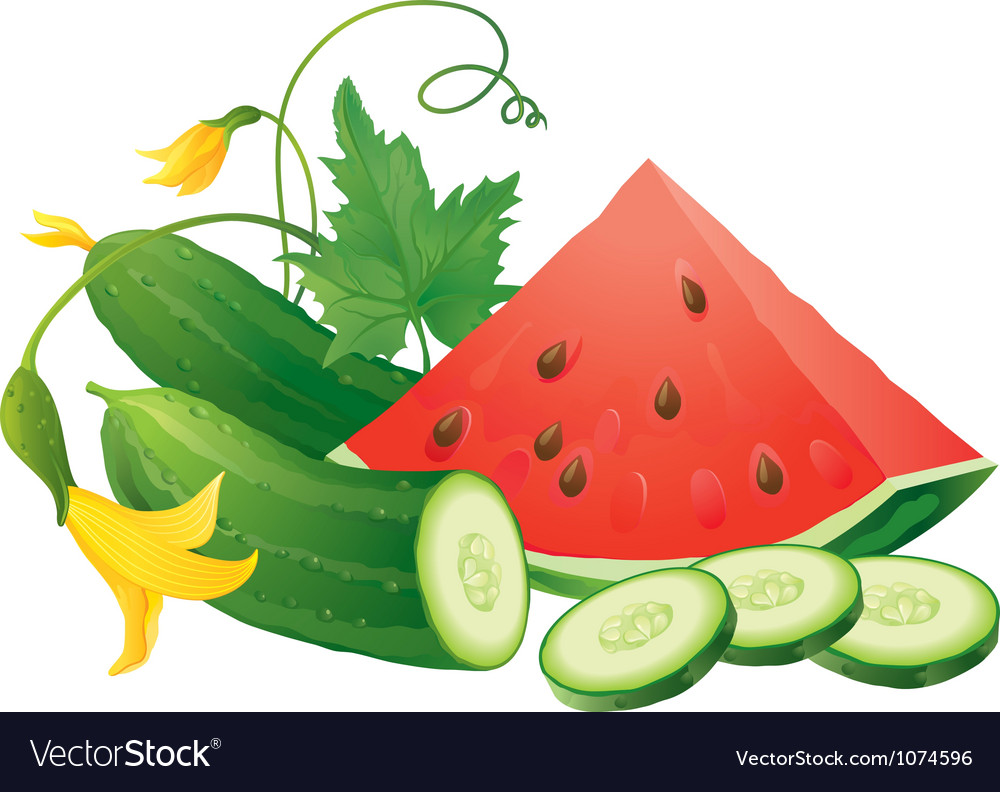 Watermelon and cucumber vector | Price: 1 Credit (USD $1)