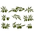 Olive branch set vector