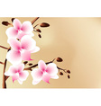 White orchids with pink spots flowers and buds vector