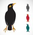 Myna bird vector