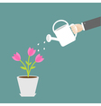Hand watering can tulip flower in the pot flat vector