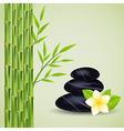 Spa stones bamboo vector