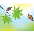 Maple leaves and butterflies vector