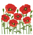 Flowers poppies isolated on white background vector