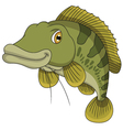 Bass fish cartoon vector