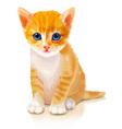 Cute orange kitten vector