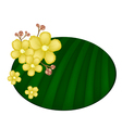 Beautiful yellow simpor flowers on banana leaf vector