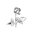 Black sketch of rose on white background vector