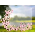 Oriental style painting cherry blossom in spring vector