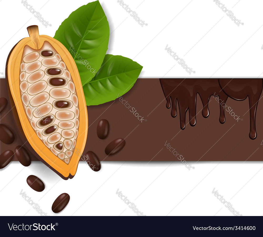 Background with cocoa beans vector | Price: 1 Credit (USD $1)