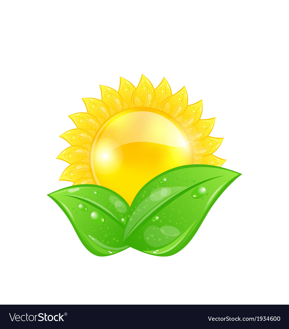 Eco friendly icon with sun and green leaves vector | Price: 1 Credit (USD $1)