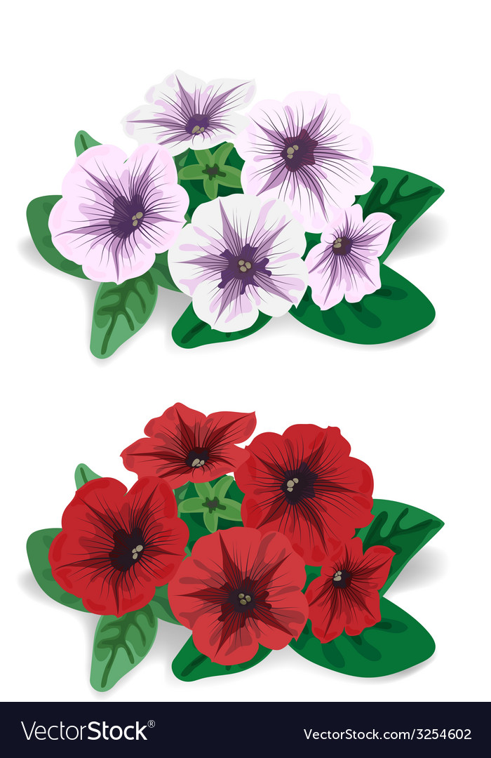 White and red flower bush petunia vector | Price: 1 Credit (USD $1)