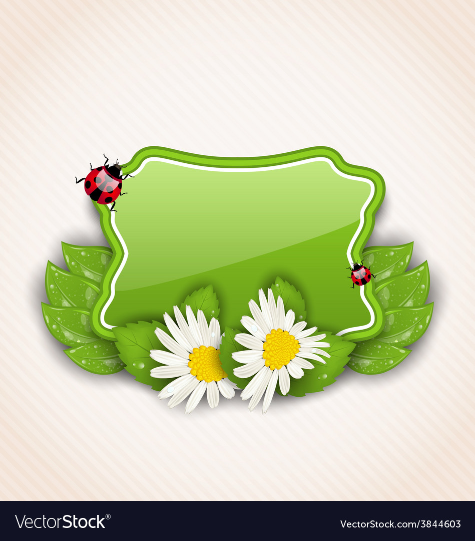Cute spring card with flower daisies leaves vector | Price: 1 Credit (USD $1)