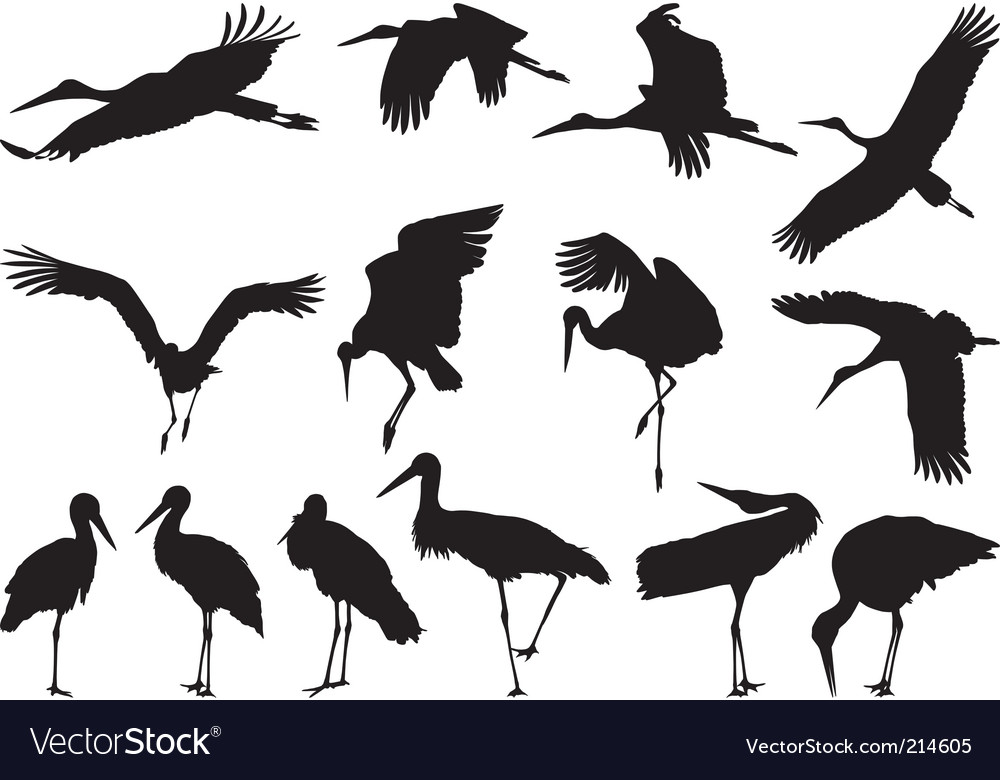 Stork silhouettes vector | Price: 1 Credit (USD $1)