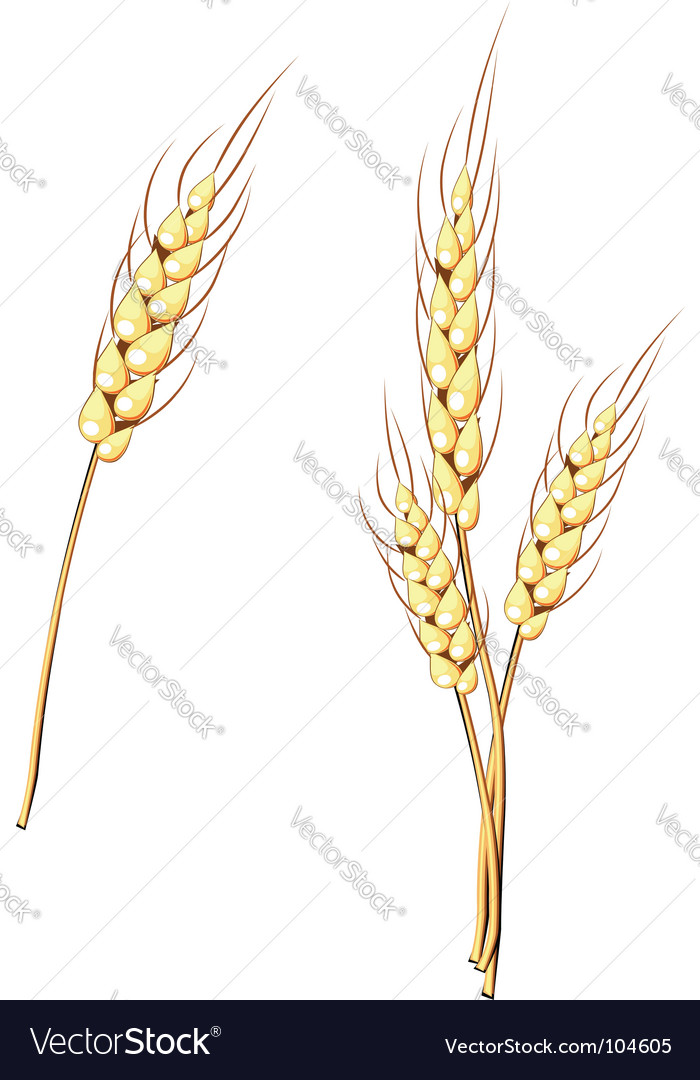 Wheat stem vector | Price: 1 Credit (USD $1)