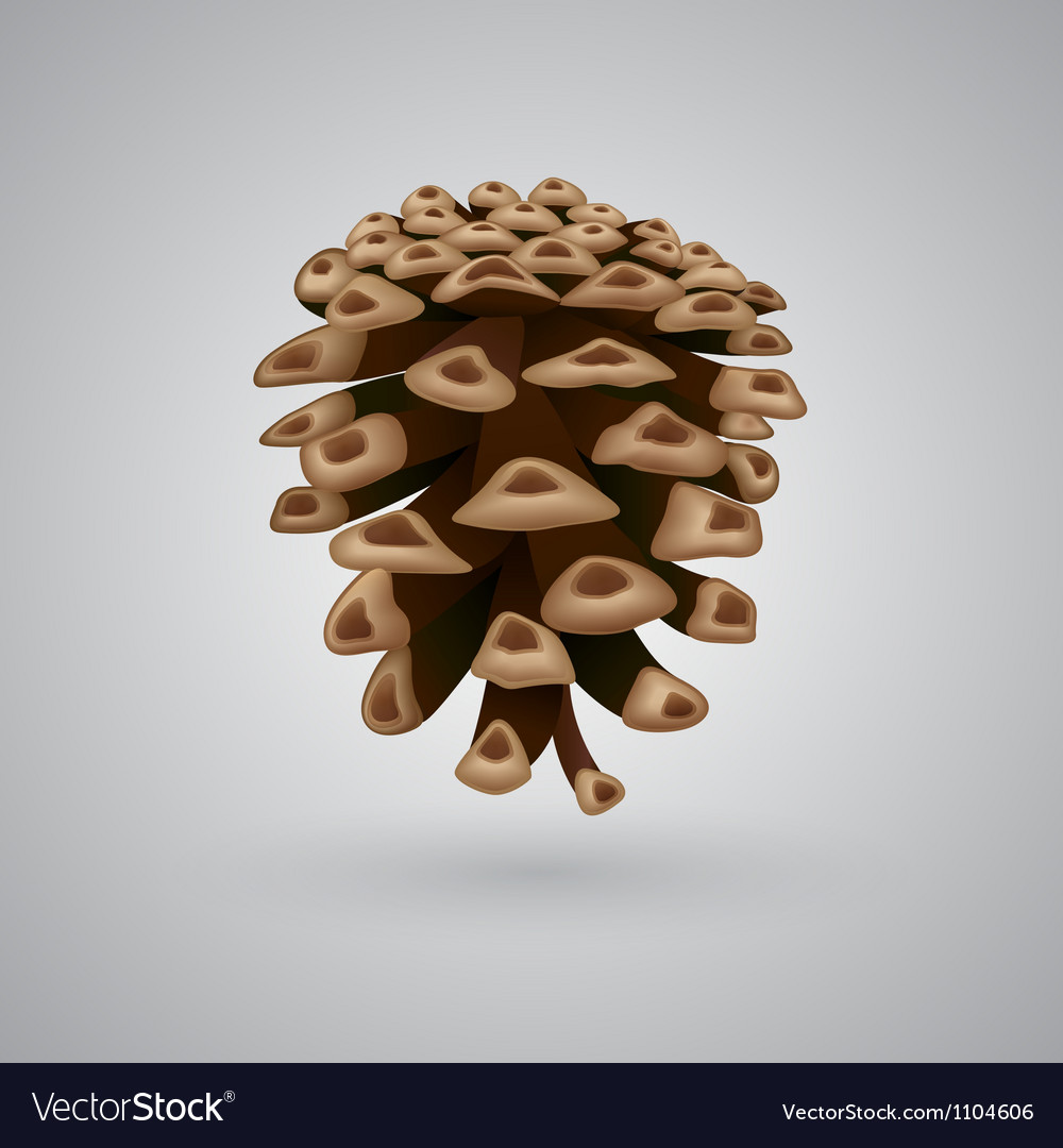 A single pine cone vector | Price: 3 Credit (USD $3)