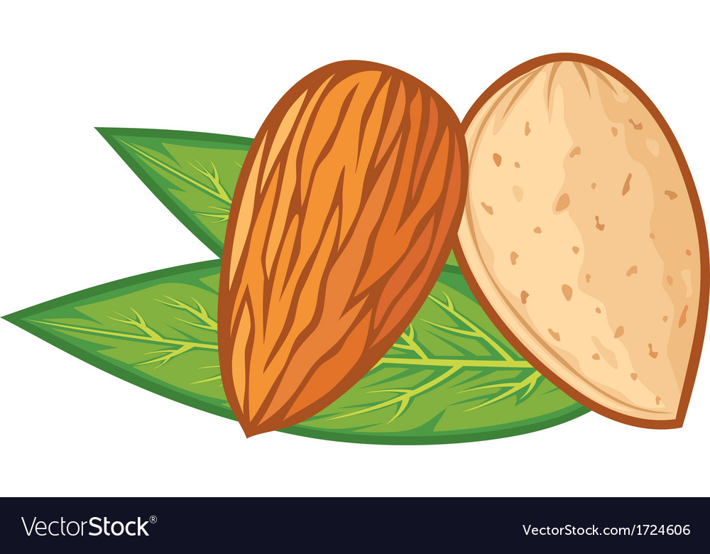 Almond with leaves vector | Price: 1 Credit (USD $1)