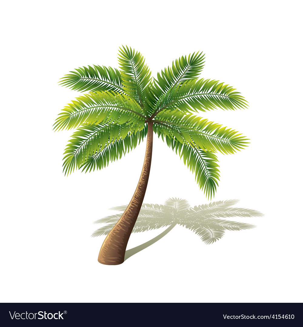 Palm tree isolated on white vector | Price: 3 Credit (USD $3)