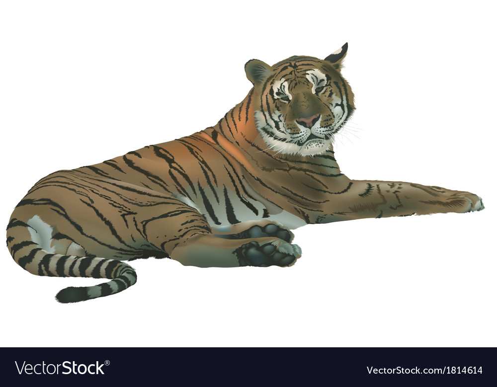 Laying tiger vector | Price: 1 Credit (USD $1)
