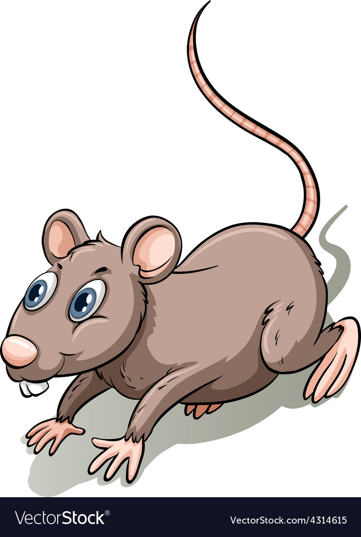 Brown rat vector | Price: 3 Credit (USD $3)