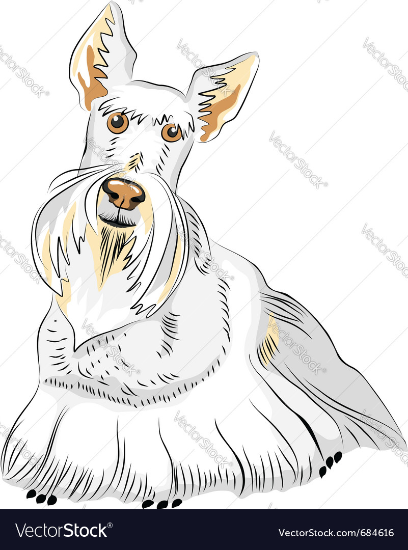 Dog breed scottish terrier vector | Price: 1 Credit (USD $1)