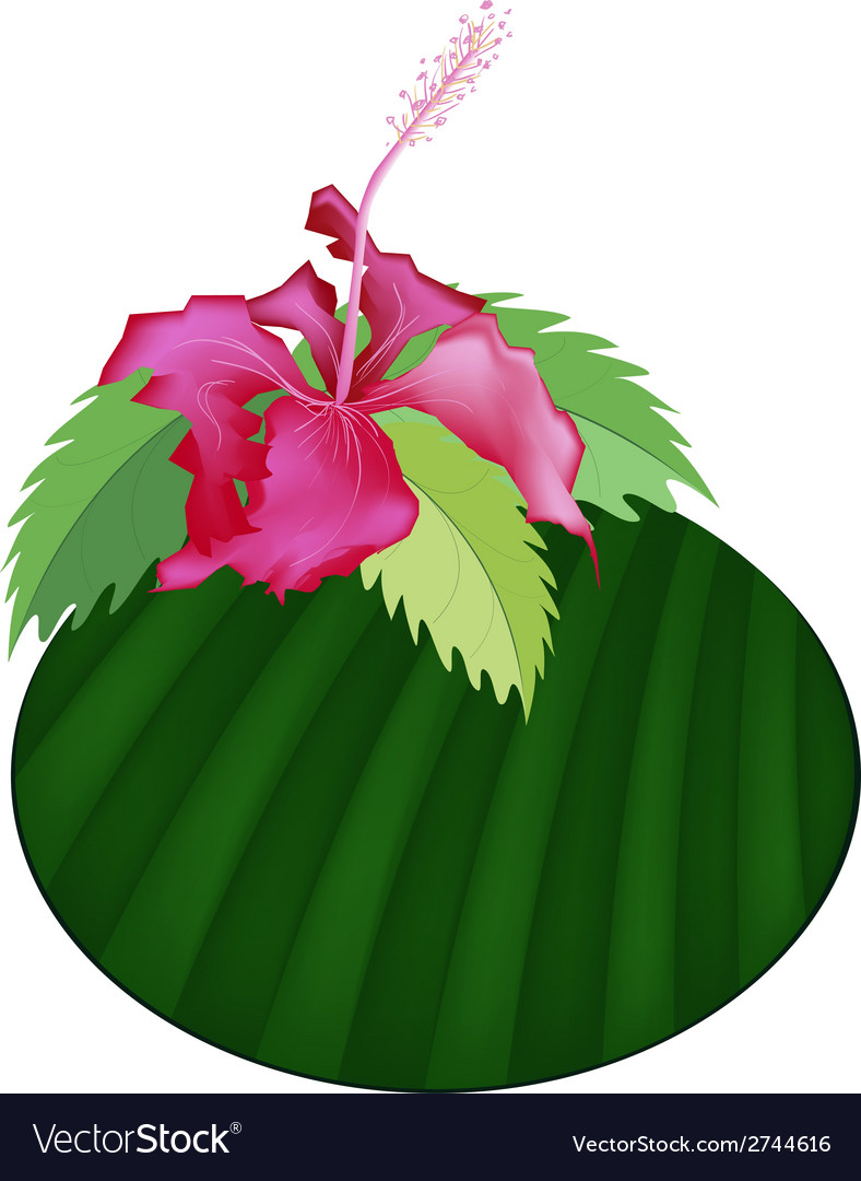 Fresh red hibiscus flowers on banana leaf vector | Price: 1 Credit (USD $1)
