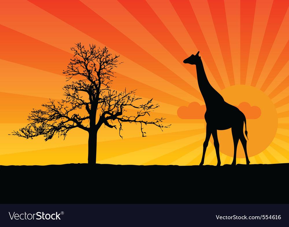 Giraffe sunrise vector | Price: 1 Credit (USD $1)