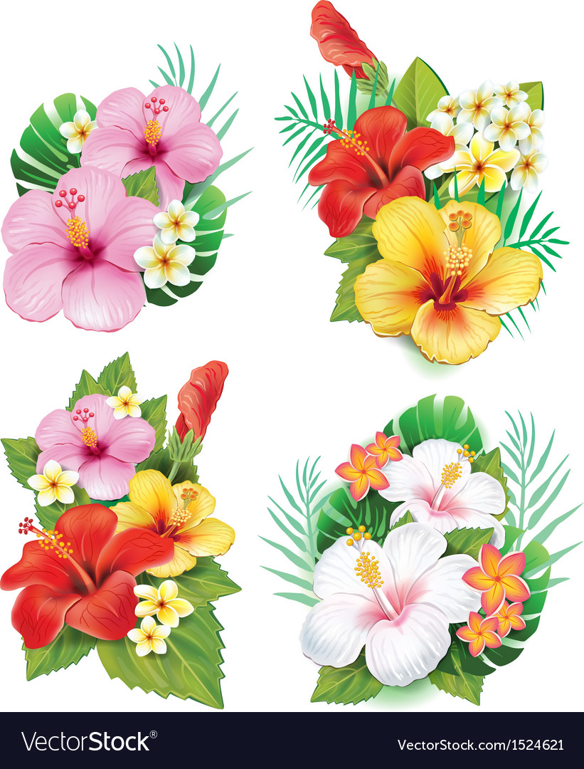Arrangement from hibiscus flowers vector | Price: 3 Credit (USD $3)