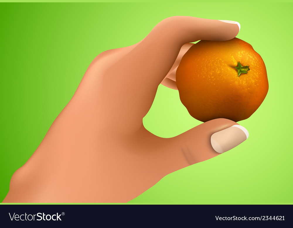 Mandarin in the hand vector | Price: 1 Credit (USD $1)