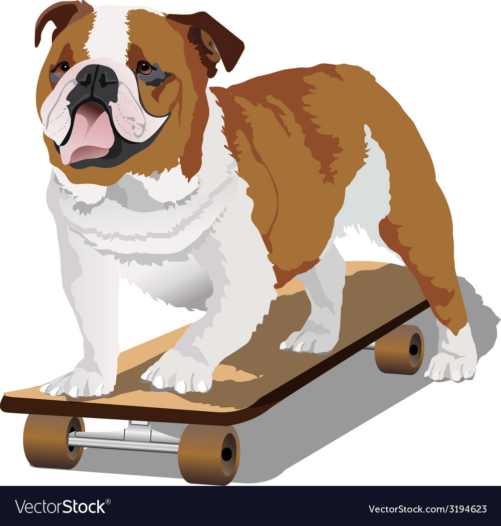 Bulldog on skateboard vector | Price: 1 Credit (USD $1)