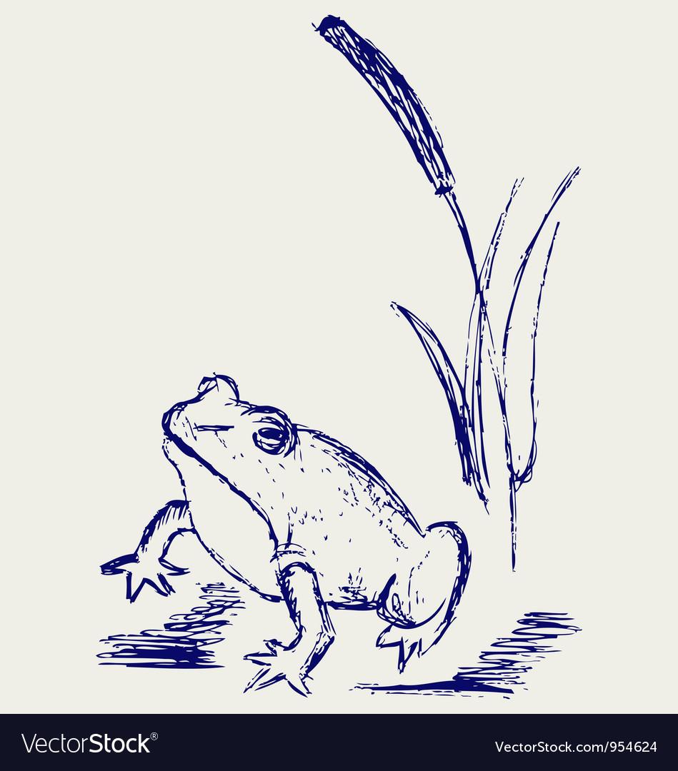 Frog sketch vector | Price: 1 Credit (USD $1)