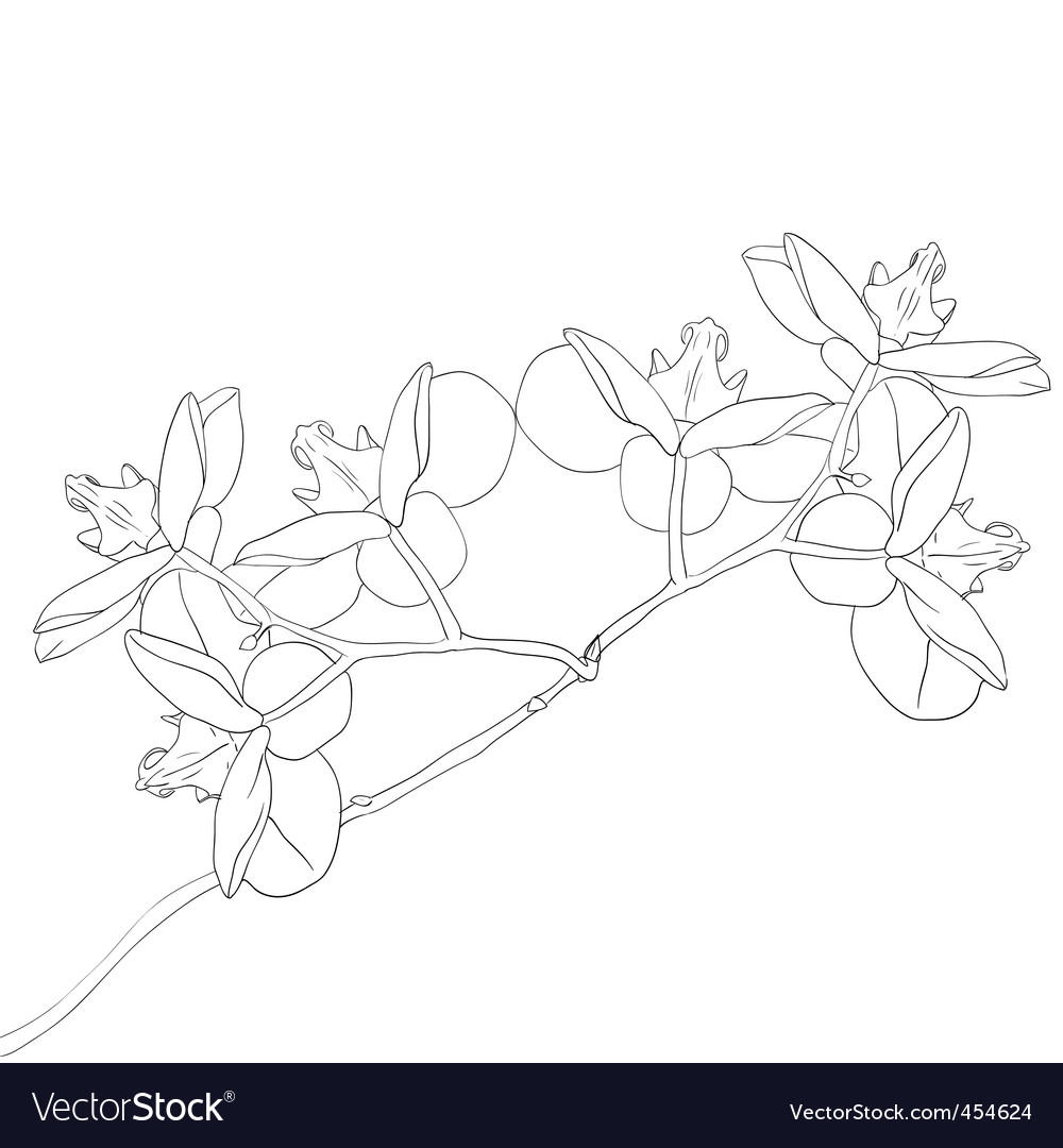 illustration of orchid flower vector | Price: 1 Credit (USD $1)