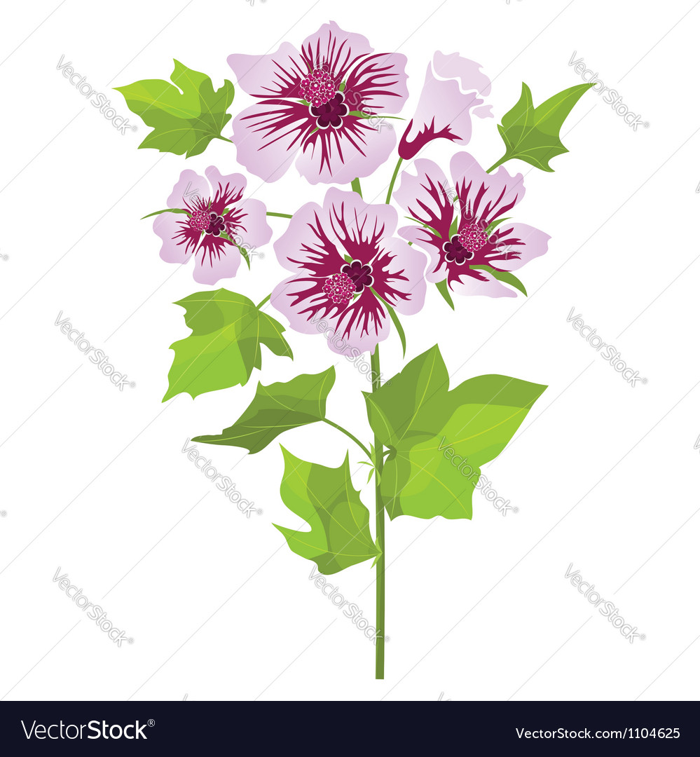 Pink flowers mallow with green leaves vector | Price: 1 Credit (USD $1)