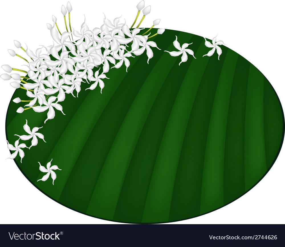 Fresh cape jasmine on green banana leaf vector | Price: 1 Credit (USD $1)