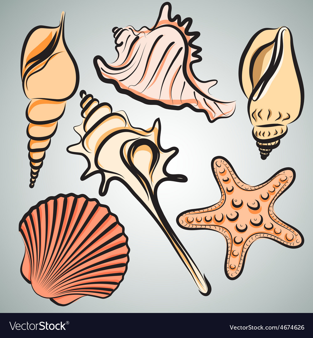 Shells2 vector | Price: 1 Credit (USD $1)