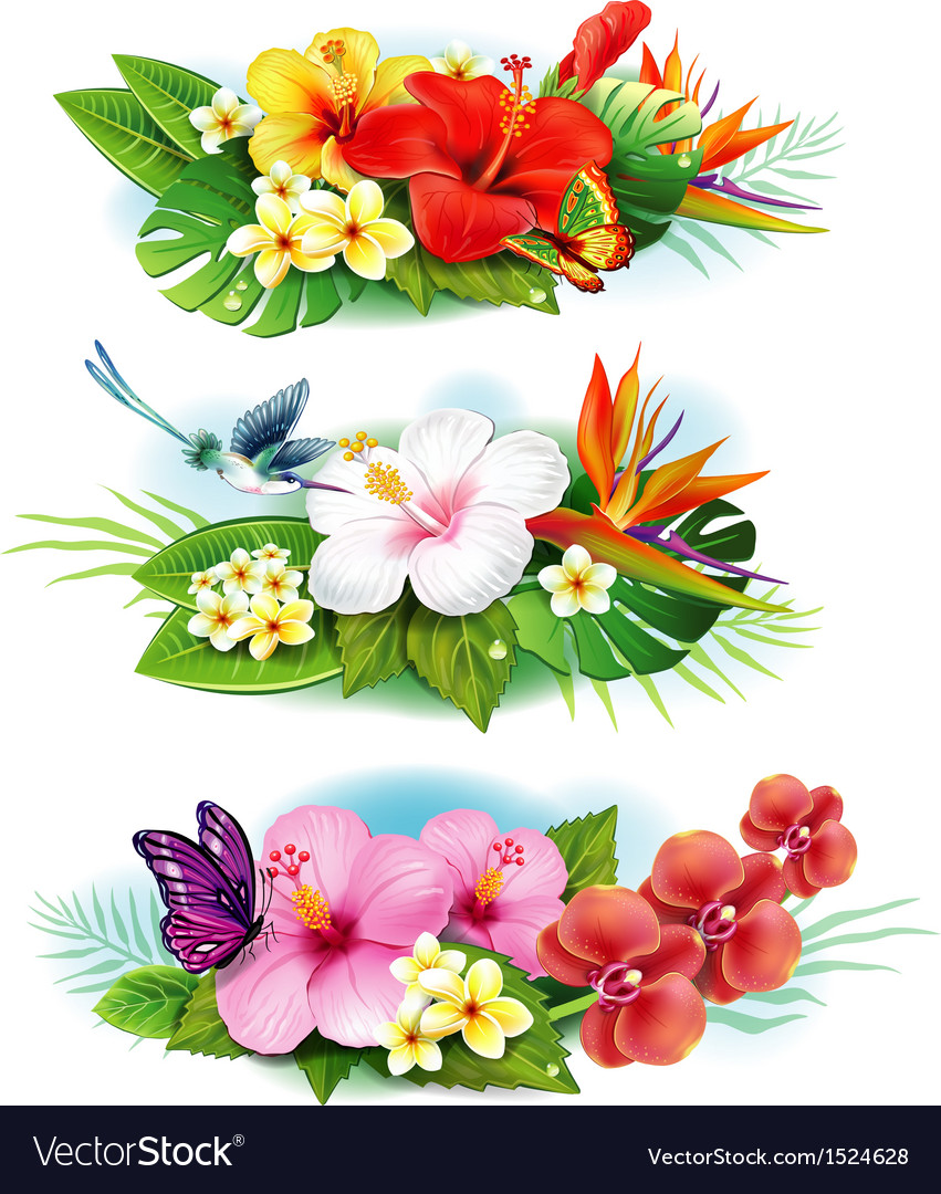 Arrangement from tropical flowers vector | Price: 3 Credit (USD $3)
