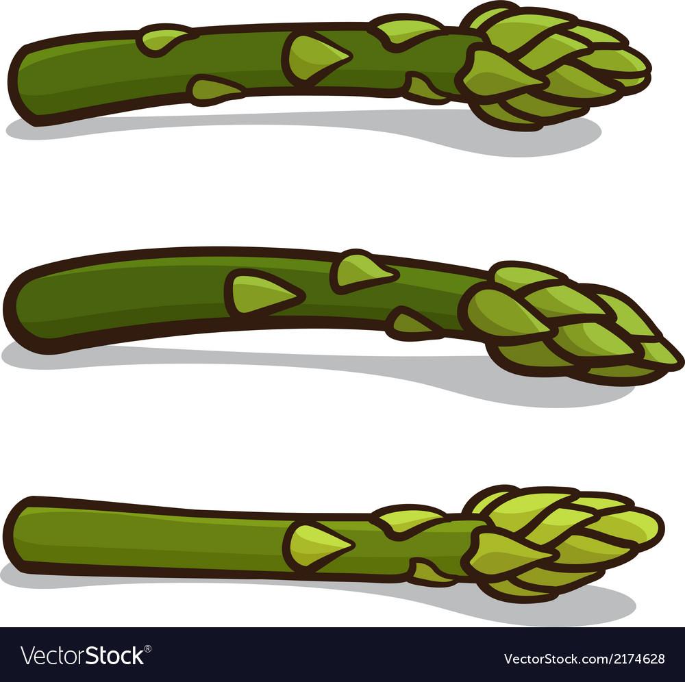 Asparagus vector | Price: 1 Credit (USD $1)