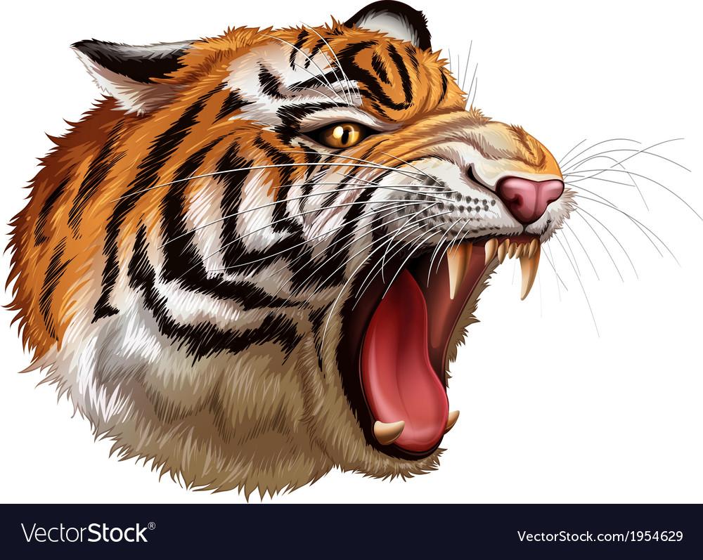 A head of a roaring tiger vector | Price: 3 Credit (USD $3)