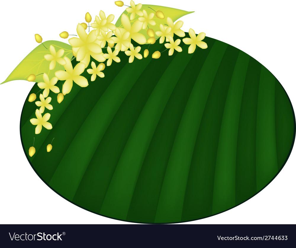 Cassia fistula flower on green banana leaf vector | Price: 1 Credit (USD $1)